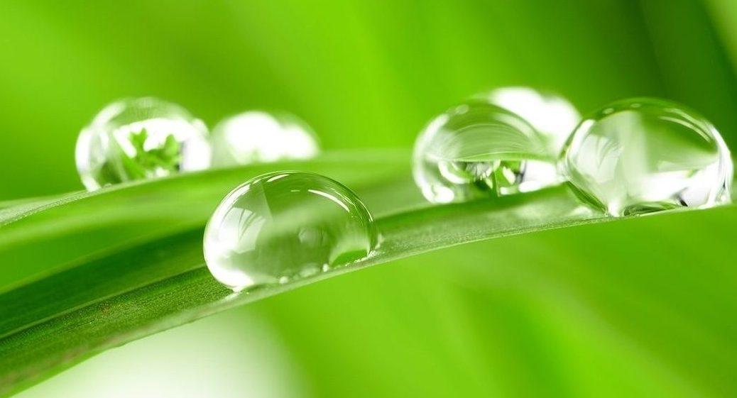 krople-trawa-wody-3